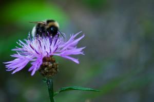 Nya blommor i partifloran